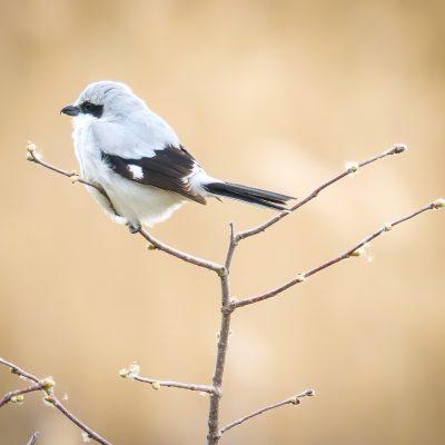 web-1-BIRDS